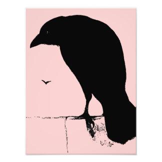 Silueta del cuervo - cuervos y cuervos del gótico  fotografías