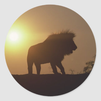 Silueta del león pegatina redonda