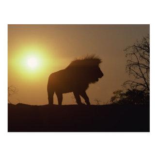 Silueta del león postal