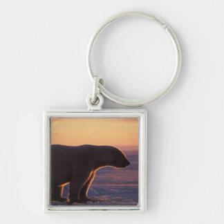 Silueta del oso polar, salida del sol, hielo de pa llavero cuadrado plateado