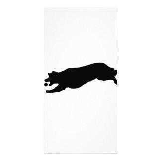 Silueta del perro del golden retriever que trae la tarjetas fotográficas