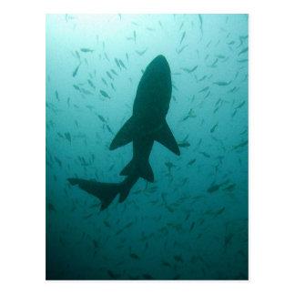 Silueta del tiburón tarjetas postales