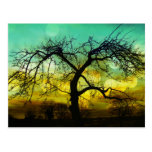 Silueta hermosa del árbol en la aguamarina de Ombr Tarjeta Postal