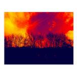 Silueta imponente quemada de los árboles de la tarjetas postales