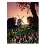 Silueta roja del molino de viento y de los tulipan tarjeta postal