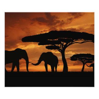 Siluetas de los elefantes africanos en puesta del fotografías
