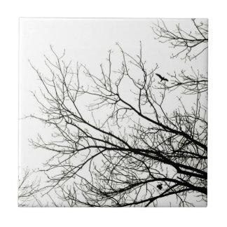 Siluetas del árbol - teja