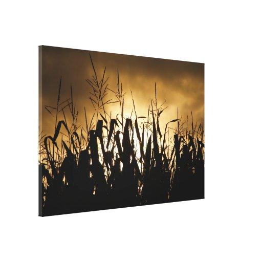 Siluetas del campo de maíz impresiones en lona estiradas