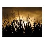 Siluetas del campo de maíz postal