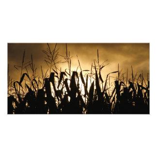 Siluetas del campo de maíz tarjeta fotográfica personalizada