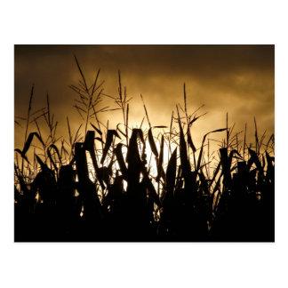 Siluetas del campo de maíz tarjetas postales