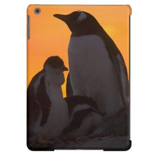 Siluetean a un adulto y un polluelo del pingüino d