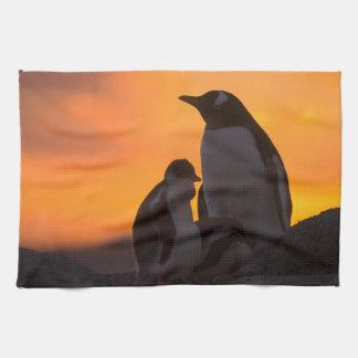 Siluetean a un adulto y un polluelo del pingüino d toalla