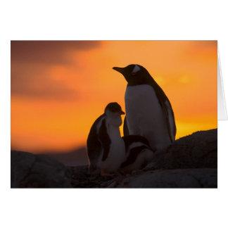 Siluetean a un adulto y un polluelo del pingüino d tarjeta de felicitación
