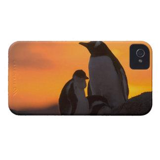Siluetean a un adulto y un polluelo del pingüino iPhone 4 Case-Mate fundas
