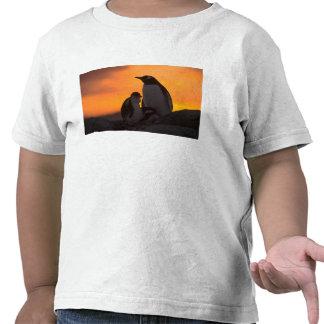 Siluetean a un adulto y un polluelo del pingüino camisetas