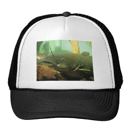 Siluro amarillo gorras