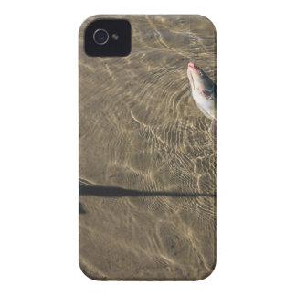 Siluro de Missouri Carcasa Para iPhone 4 De Case-Mate