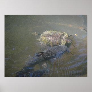 Siluro y tortuga del río poster