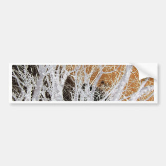 Silver Alder Tree Art Bumper Sticker