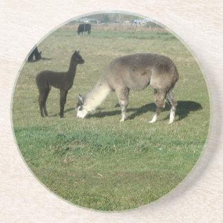 Silver alpaca and her cria beverage coaster