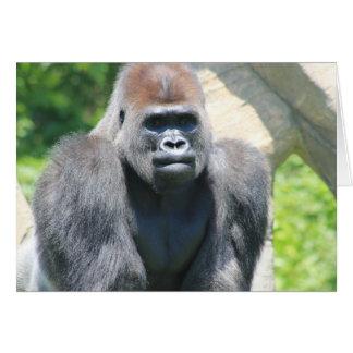 Silver Back Gorilla Card