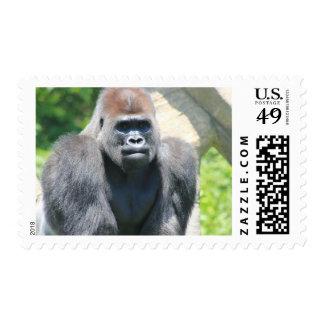 Silver Back Gorilla Postage