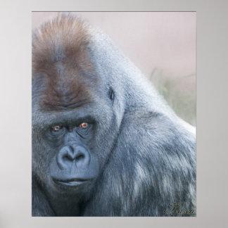 Silver back Gorilla Print