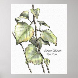 Silver Birch Poster