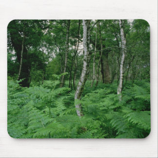 Silver birch trees and ferns, Sherwood Forest Mouse Pad