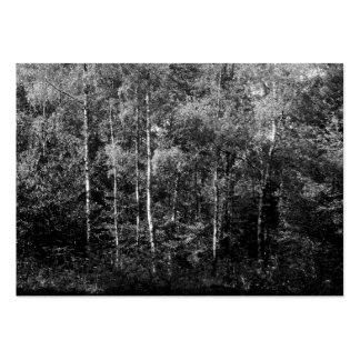 Silver Birch Trees B&W, Mini Photo Large Business Cards (Pack Of 100)