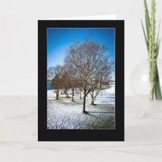 Silver birch trees (betula pendula) in winter card