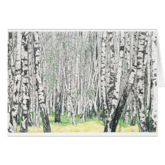 Silver Birch Wood - Blank Greetings Card