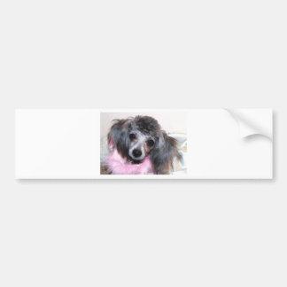 Silver Blue Poodle Puppy Face Portrait Bumper Sticker