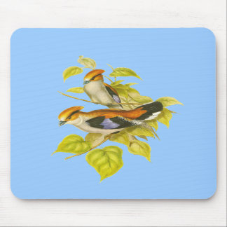Silver-breasted Broadbill Mouse Pad