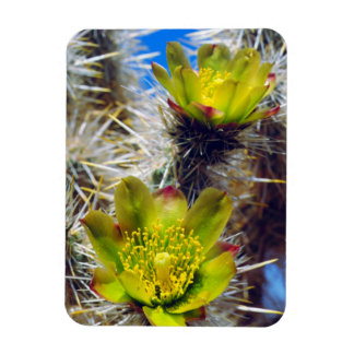 Silver Cholla Cactus Wildflowers Magnet