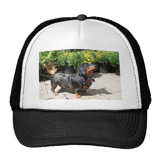 Silver Dapple Dachshund Buddy 2 Trucker Hat