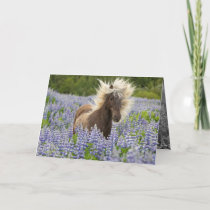 Silver Dapple in the Lupine Horse Greeting Card
