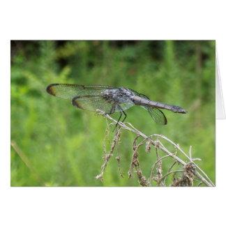Silver Dragonfly 6606 Card