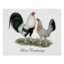 Silver Duckwing Gamefowl Poster