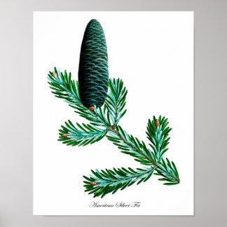Silver Fir Botanical Print #2 Home Decor Wall Art