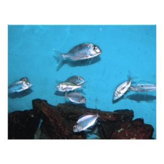 Silver fish personalized flyer