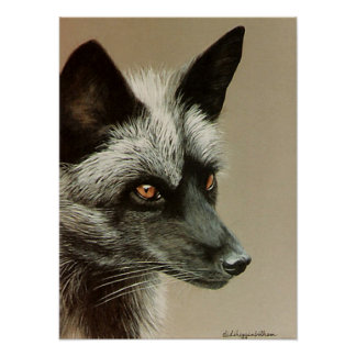 Silver Fox on canvas Posters