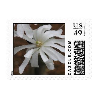Silver & Grace Garden Stamp White Flower