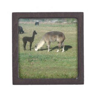 Silver Gray Alpaca & Cria Premium Trinket Box