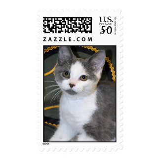 Silver/Gray/Grey and White Kitten Postage Stamps