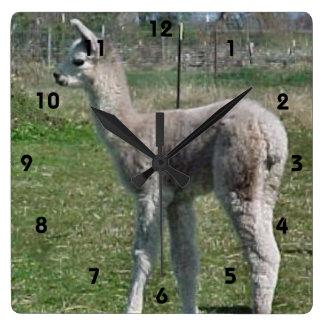 Silver Grey Alpaca Cria Square Wall Clock