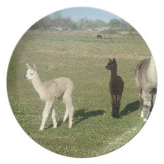Silver grey alpaca dinner plates