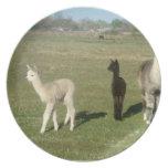 Silver grey alpaca party plates
