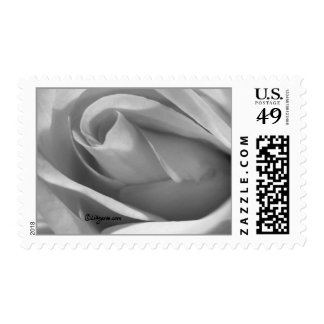 Silver Grey Rose Wedding Postage Postage